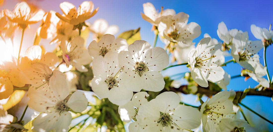 Slide_blossom1